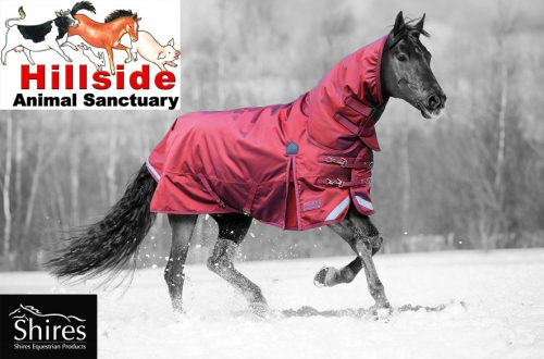 Horse Tack Suppliers Equestrian Clearance Fast Tack Direct