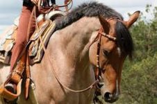 Western Riding Tack
