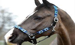 Horse Head Collars & Horse Leadropes