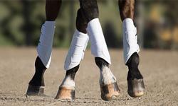 Horse Boots & Bandages