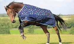 Lightweight Turnout Rugs