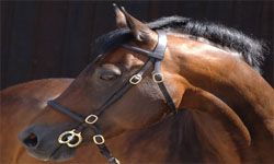 In-Hand Show Bridles & Lead Reins