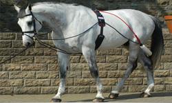Horse Training Aids & Lunging Equipment