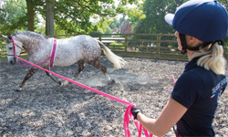 Shires Training Aids and Lunging Equipment