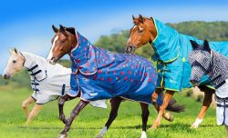 Value Equestrian Turnout Rugs