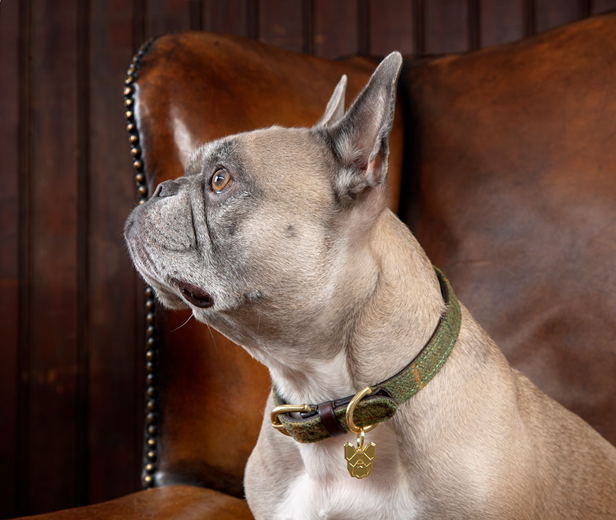 Shires Digby Amp Fox Tweed Dog Collar Fast Tack Direct