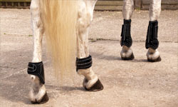 Value Equestrian Boots | Bandages