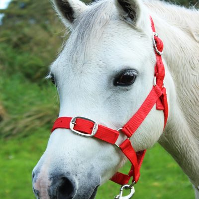 Gallop Essential Headcollar & Leadrope Set