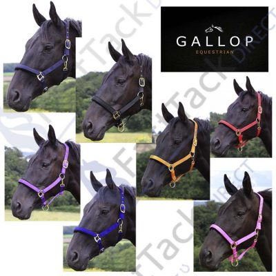 Gallop Essential Padded Headcollar