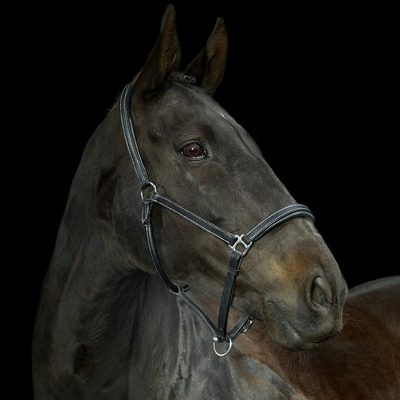 Gallop Padded Leather Headcollar