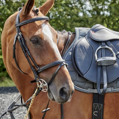 Whitaker Barton Raised Flash Bridle