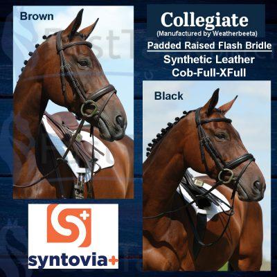 Collegiate Syntovia+ Padded Raised Flash Bridle